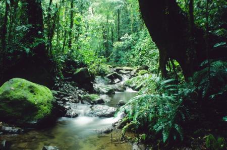 turismo-panama-naturaleza.jpg