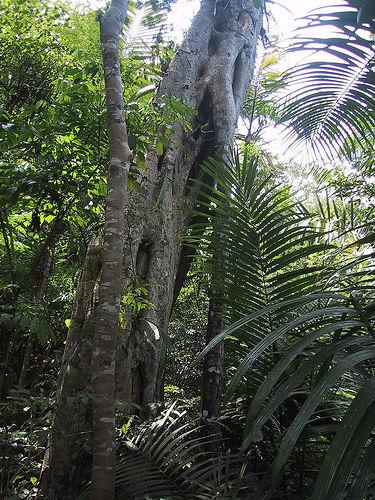 panama-bosque.jpg